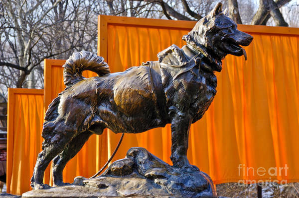 Statue Of Balto In Nyc Central Park Poster