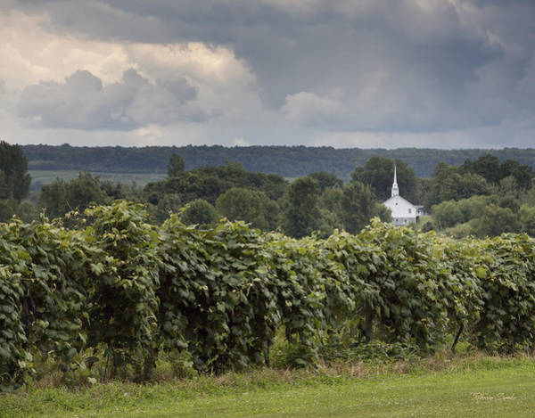 Steeple In The Vines Poster