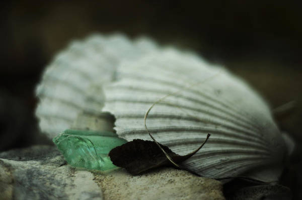 Still Life With Fossil Shells And Beach Glass Poster