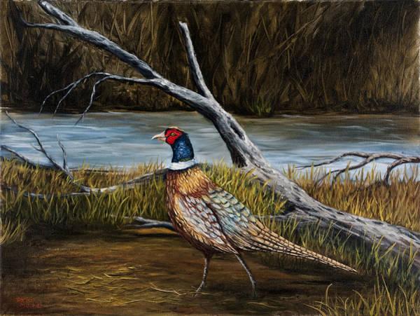 Strutting Pheasant Poster
