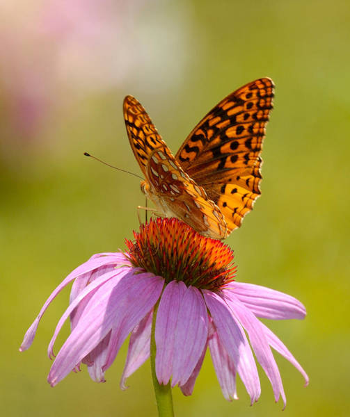 Summer Colors Butterfly Poster