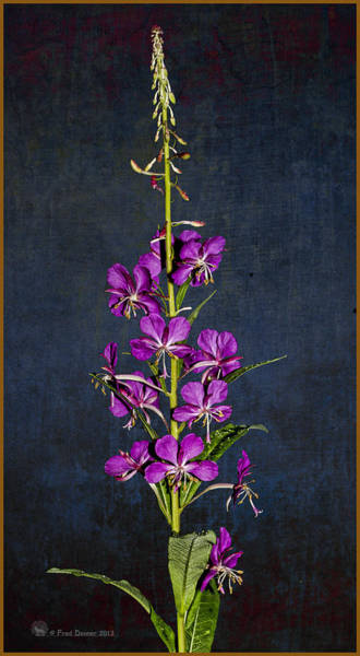 Summer Fireweed Poster