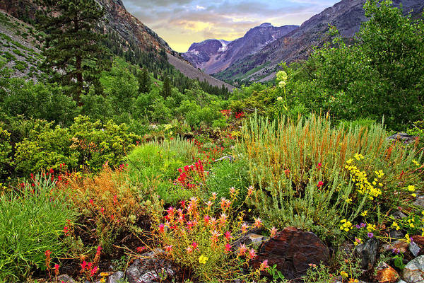 Summer Wildflowers In Lundy Canyon Poster