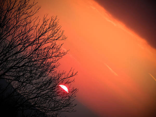 Sunrise And Hibernating Tree Poster