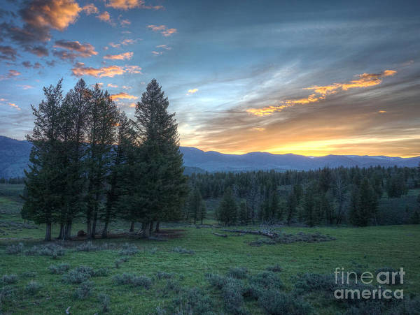 Sunrise Behind Pine Trees In Yellowstone Poster