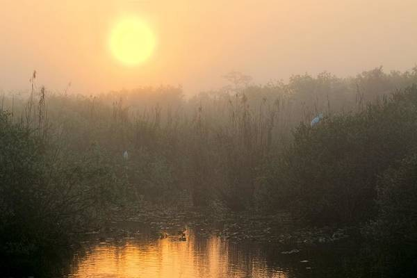 Sunrise In The Everglades Poster
