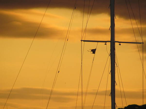 Sunrise Mast Cables Poster