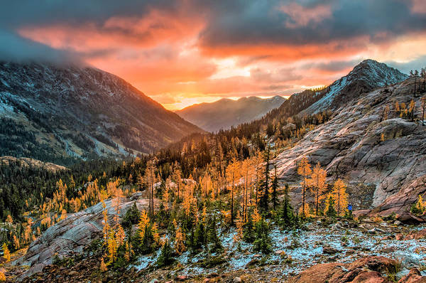 Sunrise On The Larches Poster