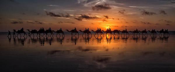 Sunset Camel Safari Poster