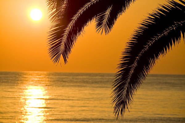 Sunset Golden Color With Palm Poster