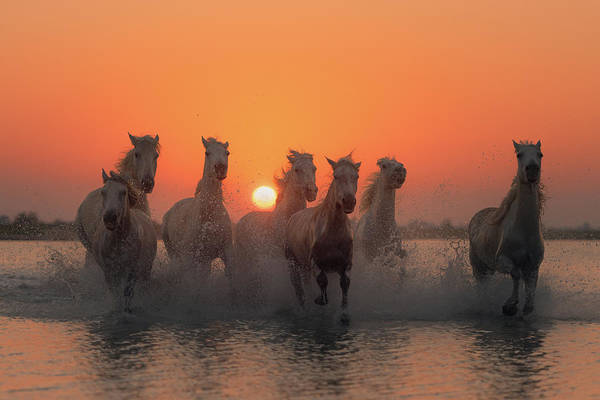 Sunset In Camargue Poster