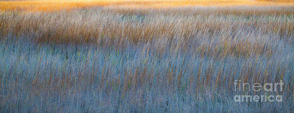 Sunset Marsh In Blue And Gold Poster