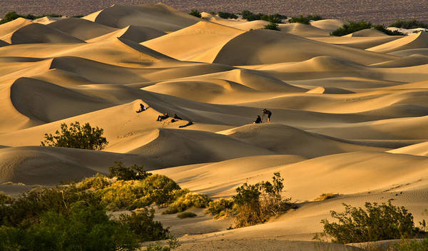 Poster featuring the photograph Sunset Over Mesquite Flat Dunes by Gigi Ebert