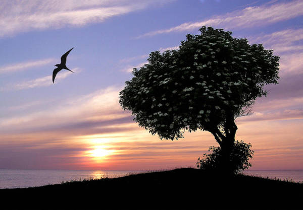 Sunset Tree Of Tranquility Poster