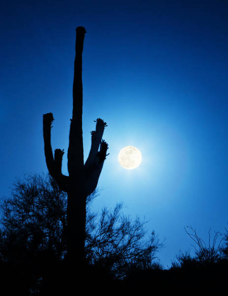 Super Full Moon With Saguaro Cactus In Phoenix Arizona Poster