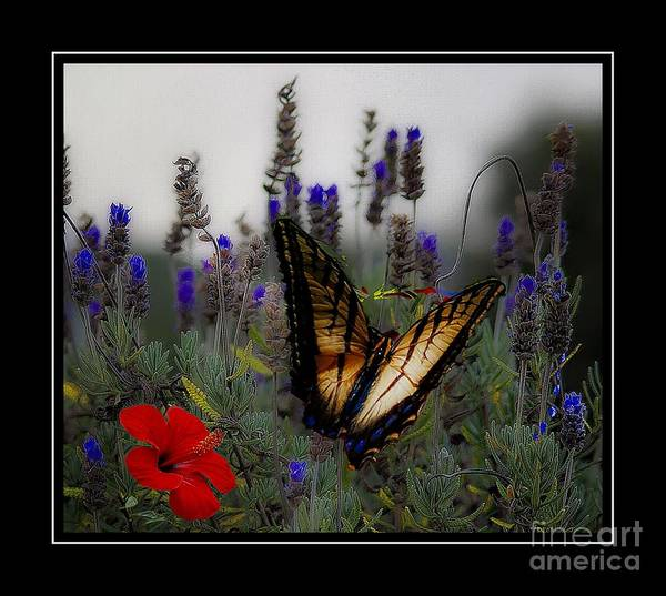 Swallowtail Among Blue Flowers Poster