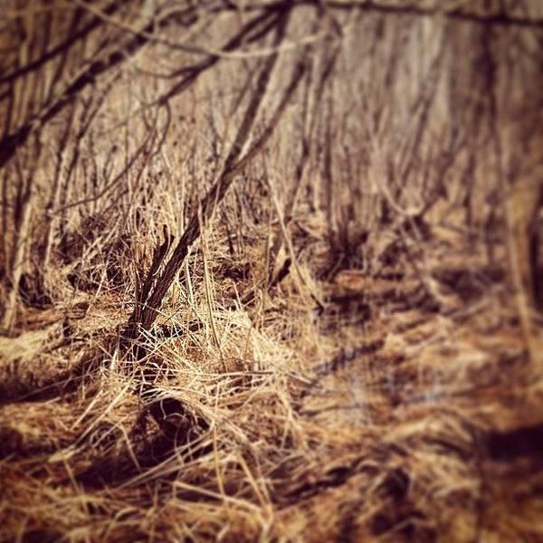 Swamp In Spring Poster