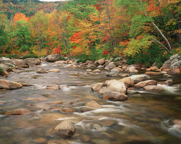 Swift River In Autumn, White Mountains Poster