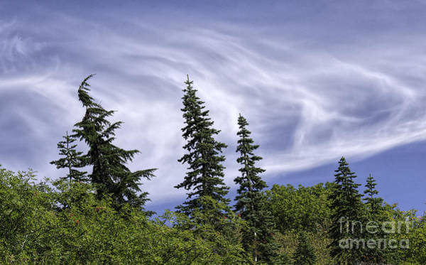 Swirling Clouds Crooked Trees Poster