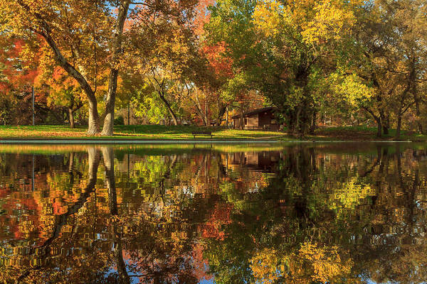 Sycamore Reflections Poster