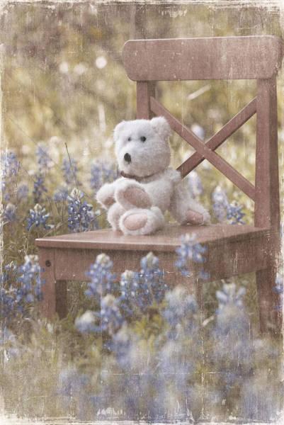 Teddy Bear And Texas Bluebonnets Poster