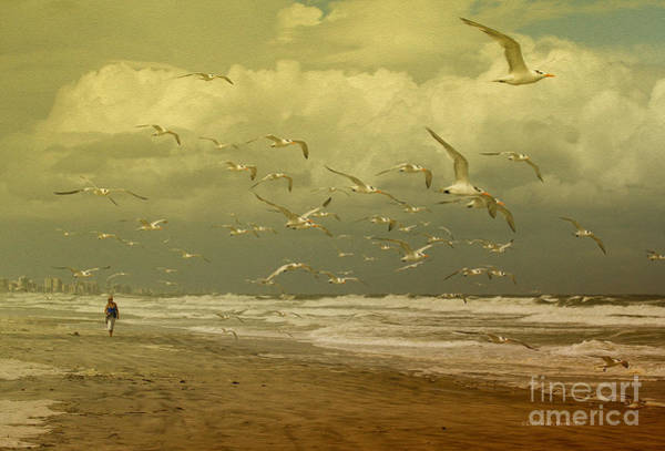 Terns In The Clouds Poster