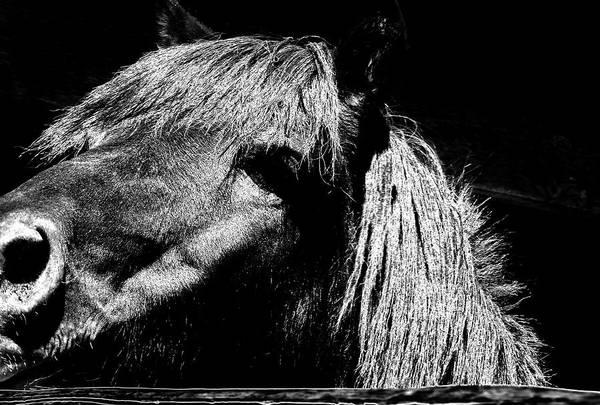 Teton Horse Poster