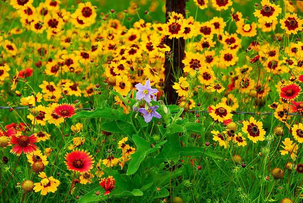 Texas Spring Delight Poster