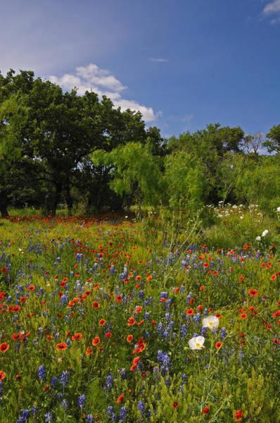 Texas Spring Spectacular Poster
