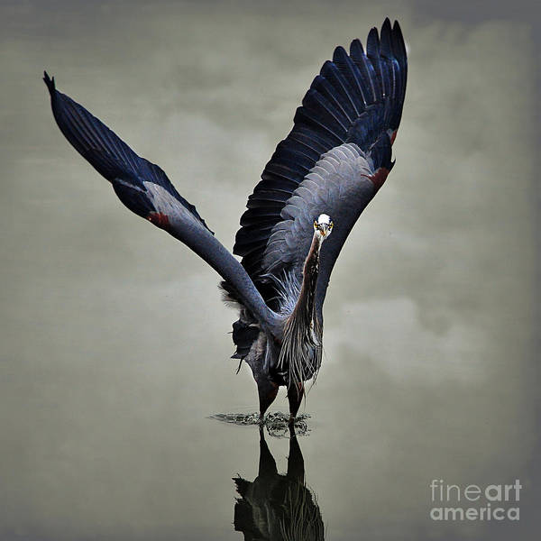 The Big Great Blue Heron Poster
