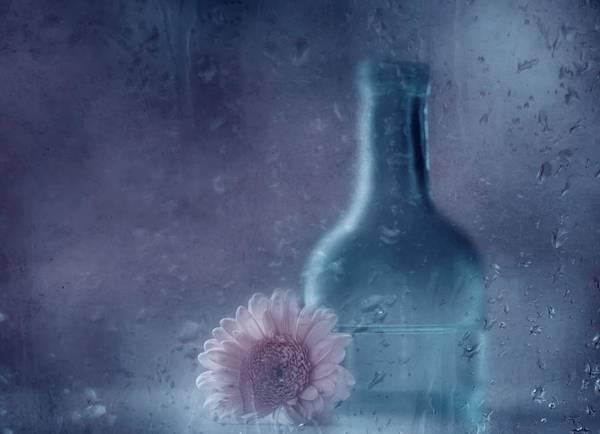 The Blue Bottle Poster