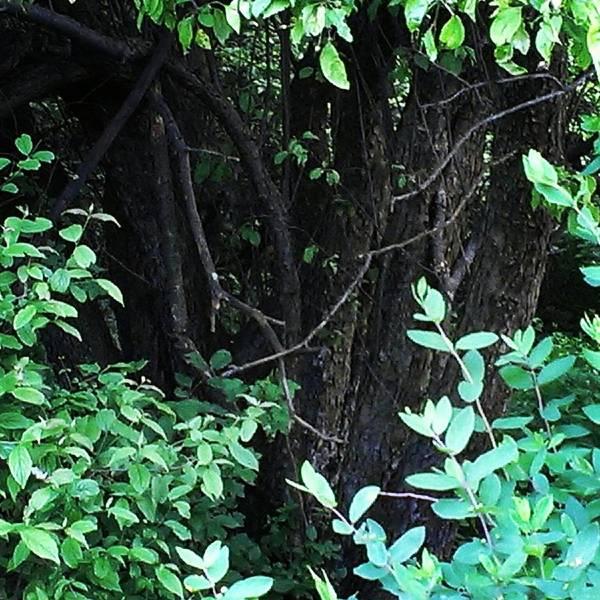 The Deep Dark Woods Poster