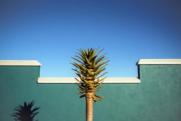 The Desert Blooms Poster