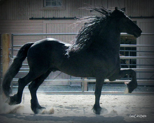 The Friesian Trot Poster