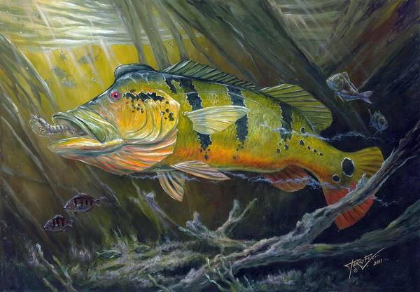The Great Peacock Bass Poster