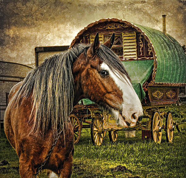 The Gypsy Vanner Poster