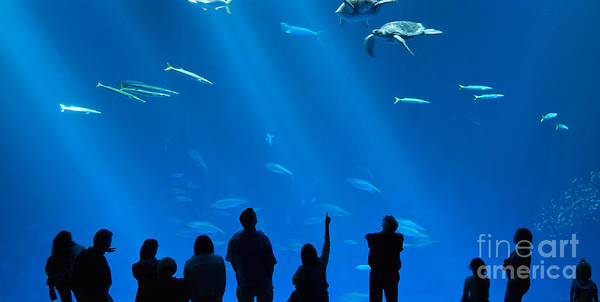The Magnificent Open Sea Exhibit At The Monterey Bay Aquarium. Poster