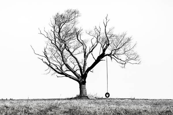 The Playmate - Old Tree And Tire Swing On An Open Field Poster