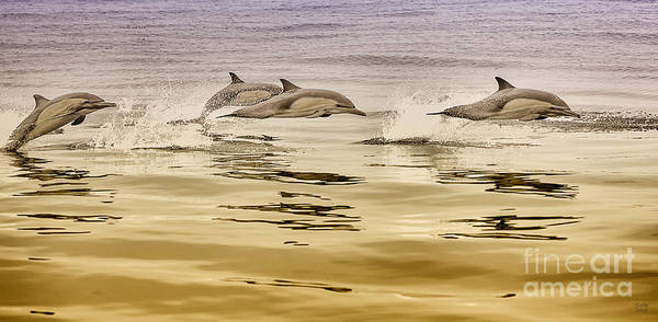 Dolphin Canvas Print, Photographic Print, Art Print, Framed Print, Greeting Card, Iphone Case, Poster