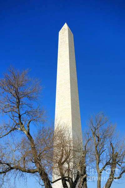 The Washington Monument And The Big Old Tree On The National Mall Poster
