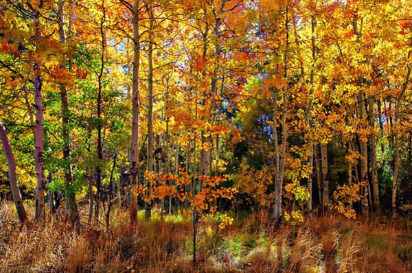 Thomas Creek Fall Color Poster