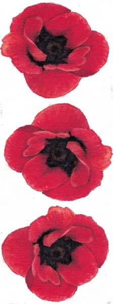 Three Red Poppies Poster