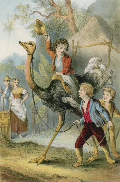 Training The Ostrich Poster