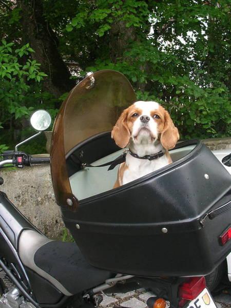 Traveling Dog Poster