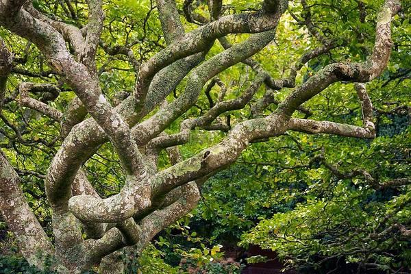 Tree #1 Poster