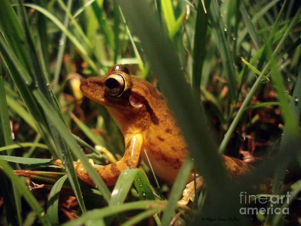 Tree Frog Chorus Poster