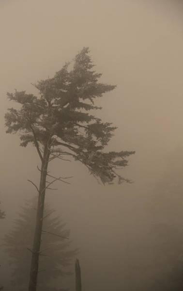 Tree In Fog Poster