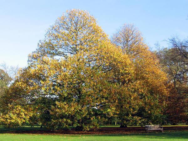 Tree In Kew Gardens Poster