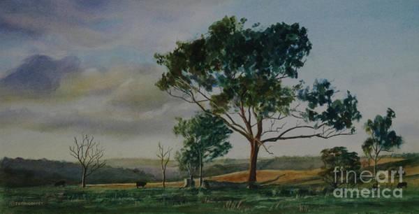 Tree Near Grove Creek Observatory Poster