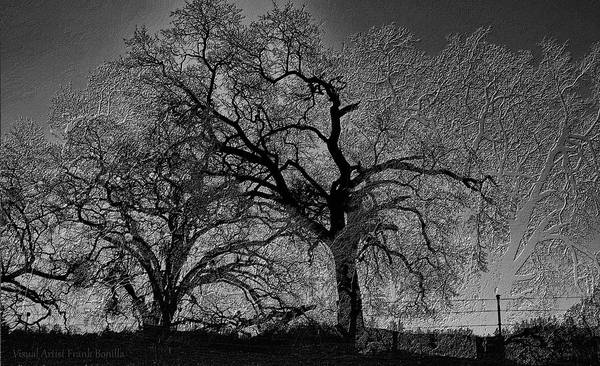 Poster featuring the digital art Tree Night II by Visual Artist Frank Bonilla